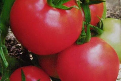 Томат «Загадка»: описание сорта, фото и основные характеристики помидора Русский фермер