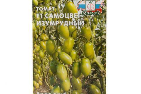 Сорт помидор Самоцвет Изумрудный F1 описание и характеристика гибрида