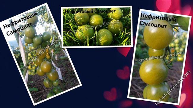"""Отзыв: Семена томата СеДек """"Самоцвет нефритовый"""" - Экстравагантный гибрид с зелёными плодами. Томаты для ценителей необычного."""
