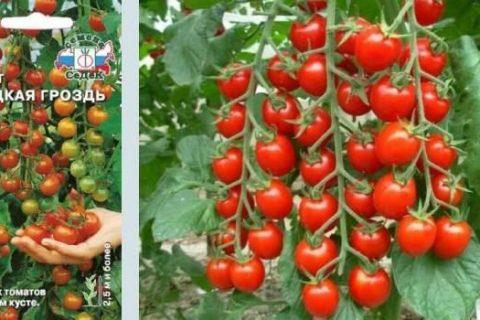 Томат Сладкая гроздь: описание и урожайность сорта, фото, отзывы