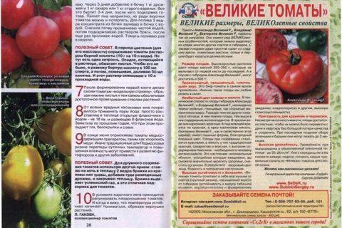 Томат Алый Фрегат F1: характеристика и описание сорта, фото и отзывы об урожайности помидоров