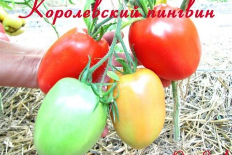 Томат Спасская башня: описание и характеристика сорта, особенности выращивания и посадки, отзывы, фото