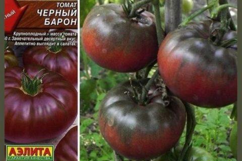 Томат Черный барон: характеристика и урожайность сорта, особенности выращивания и ухода, преимущества и недостатки