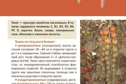 Томат Черрипальчики: характеристика и описание сорта, отзывы, фото, урожайность
