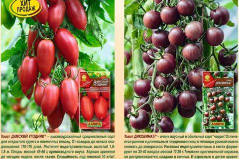 Шива — сорт растения Томат