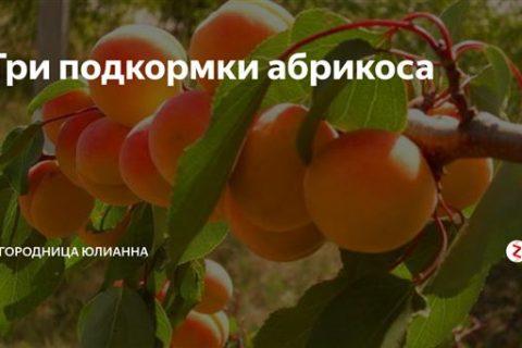 Чем подкормить абрикос весной для хорошего урожая: лучшие удобрения, видео