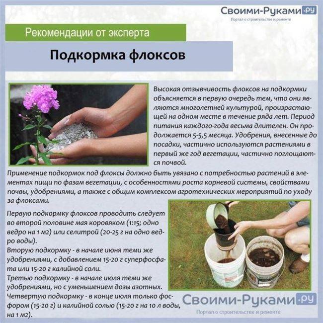 Какие удобрения выбрать для подкормки тюльпанов при посадке осенью