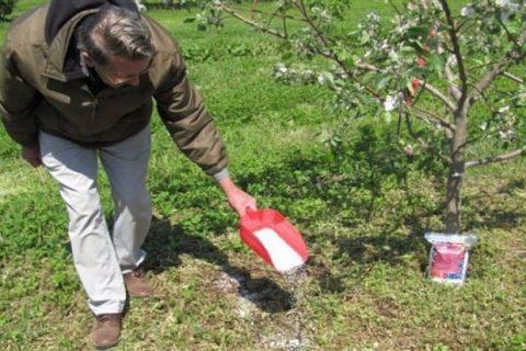 Яблоня – самая распространенная садовая культура в современной жизни. Каждый плод – комплекс витаминов, так важный для здоровья человека. Важная часть развития яблони – правильное удобрение. Как и чем подкормить яблоню? Чем подкармливать молодую и старую яблоню во время плодоношения?