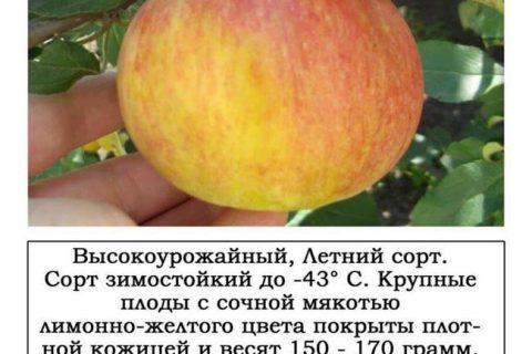 Оренбургское Позднее — сорт растения Яблоня