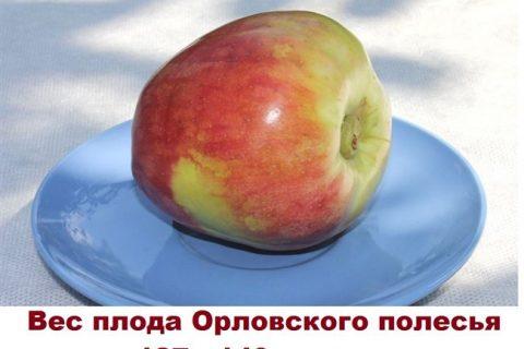 Яблони «Орловское полесье»: подробное описание сорта и его фото, особенности и характеристики