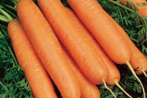 Морковь Юкон F1 — фото урожая, цены, отзывы и особенности выращивания