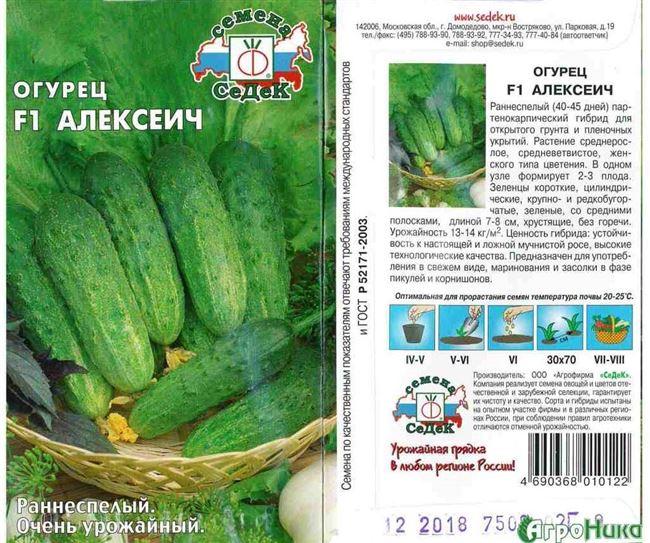 Аккорд - сорт растения Огурец