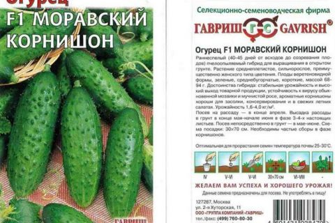 Огурец Алфавит f1: описание сорта, фото, посадка и уход, отзывы о семенах Манул