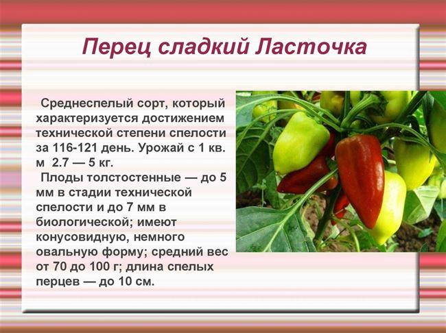 Зазнайка - сорт растения Перец сладкий