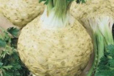 Максим — сорт растения Сельдерей корневой