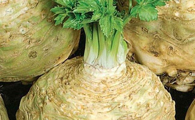 Какие виды сельдерея бывают? 19 лучших сортов овоща