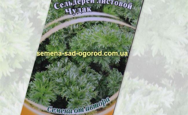 Сельдерей листовой Чудак — описание сорта, выращивание и отзывы