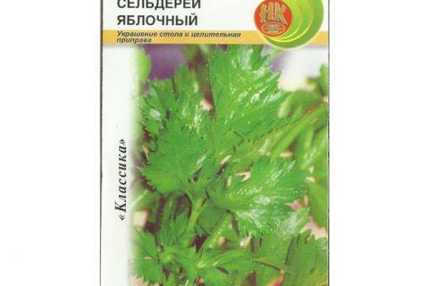 Сельдерей корневой Яблочный: описание, фото, отзывы, выращивание из семян