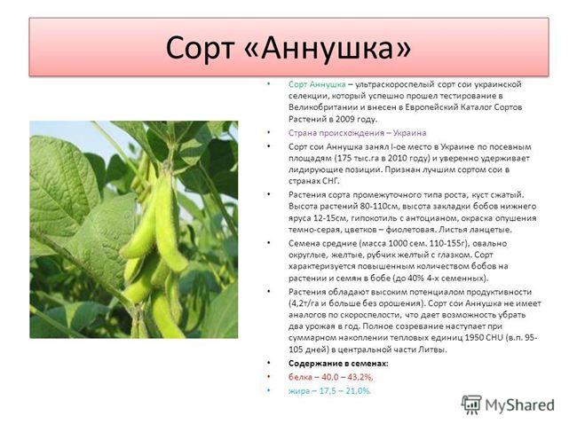 Альянс - сорт растения Соя