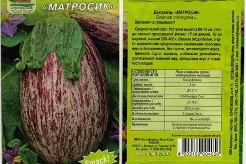 Матросик баклажан: описание, выращивание, уход, фото
