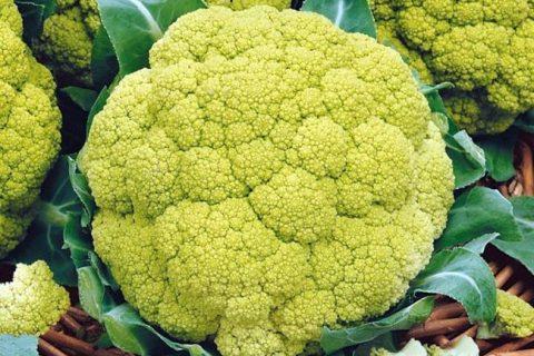 Капуста цветная Золотая Краса семена — низкая цена, описание, отзывы, продажа